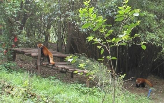 Google Maps: visitate gli Zoo nel mondo grazie a Street View