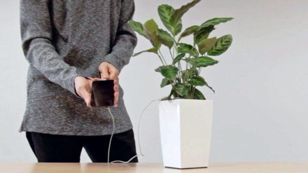 Con Bioo Lite sarà possibile ricaricare lo smartphone con una pianta